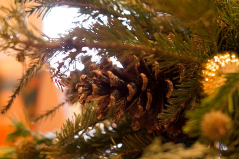 Cone and fir and christmas ball Fotografía