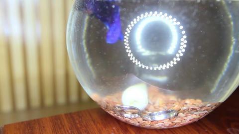 Wedding Rings Fall into Aquarium with Purple Fish Closeup Archivo