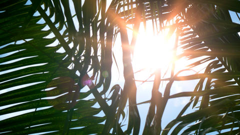 Sunshine through Palm Fronds on a Tropical Paradise Footage
