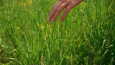 Woman's Hand Touch Green Grass In Field. Rural And Natural Scenery Footage