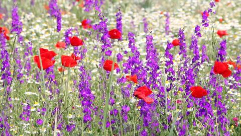 wild flowers spring scene Footage