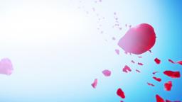 Sakura Petals Sky Background (Loop) Stock Video Footage