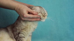 The girl caresses her cat Footage