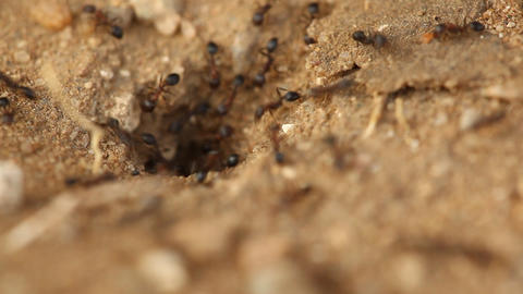 Ants build home Footage