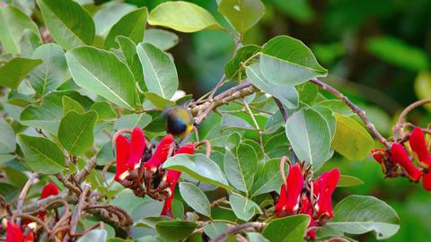 Bali. Indonesia. Tropical bird feeds on tree Footage