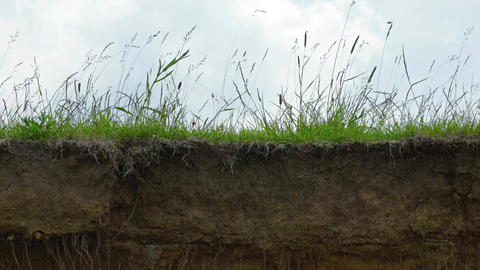 Tall grass growing on the abrupt edge of a cliff Footage