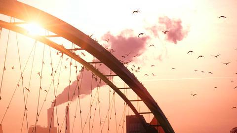 Beautiful romantic sunset background birds swarm slow... Stock Video Footage