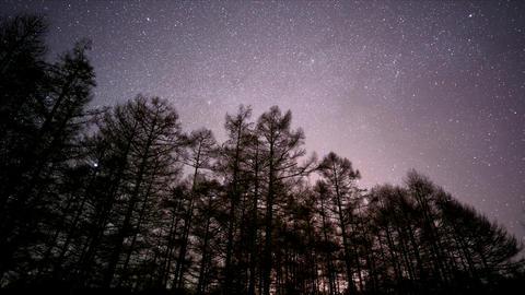 Stars going down to Forest ライブ動画