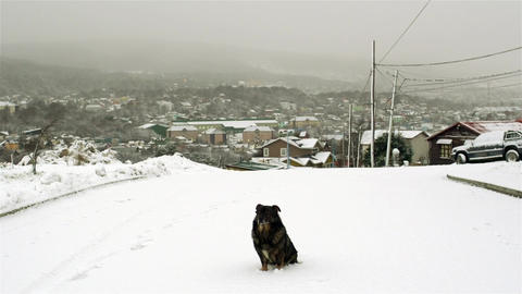 Dog sitting on Nevada Street Image