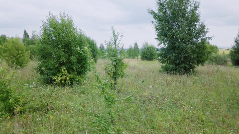 It rises from the forest boundary. Panorama of a grove and fields. Russia, From Footage