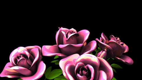 Pink Roses Bouquet On Black Text Space Animación