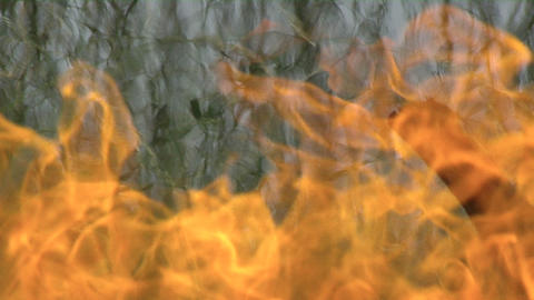 Close up of intense fire burning in tall grass Footage