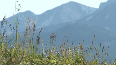 Colorado grass with mountain backdrop Footage