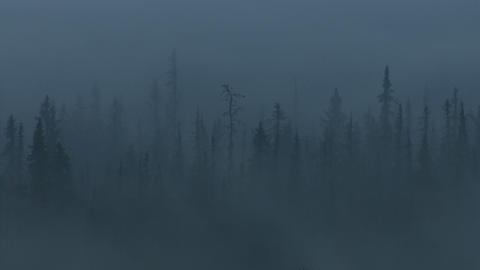 Eerie misty forest Footage