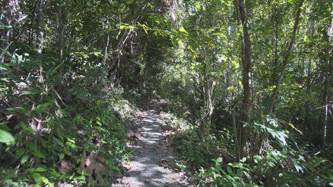 Hiking along a Tropical Rainforest Wilderness Trail in Thailand Footage