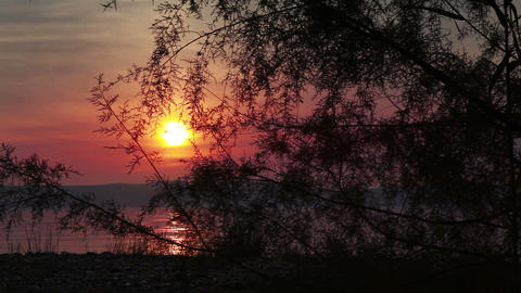 Sunset at sea of galilee with tree Footage