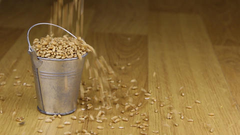 Fall into a bucket of wheat grains and on wooden floor Footage