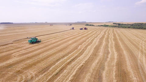 Combine harvester harvest wheat on the field, From Dron Footage