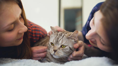 Closeup of two happy women friends lying in bed hug fat angry cat and have fun Photo