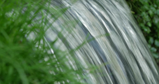Close up shot of spring flowing through raw green of grass 画像