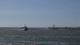 Fishing boat returning to port followed by seagulls Footage