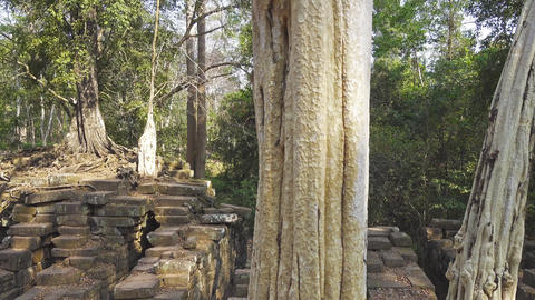 trees on ruins of temple in Angkor Wat, Cambodia Footage