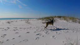 Happy running dog on a sunny white sand beach Filmmaterial