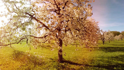 Aerial view spring trees background springtime sun flare light nature plants Footage