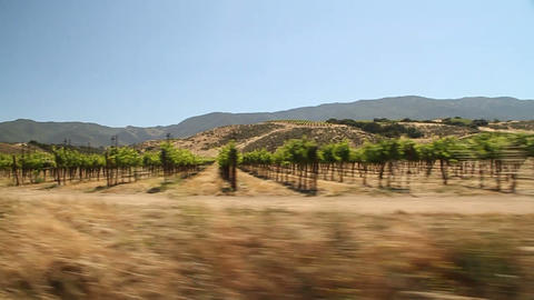 Driving through california wine country Footage