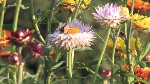 Hd flowers flower Footage