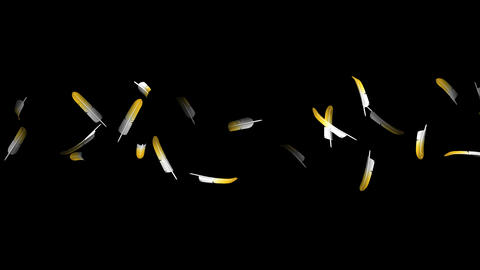 Yellow Feathers On Black Background CG動画