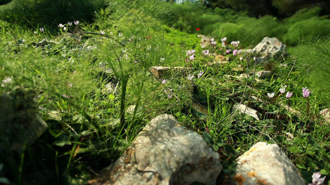 Rocks grass wildflowers and shrubs Footage