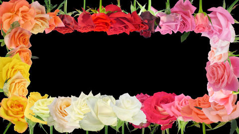 Montage of opening colorful roses time-lapse with alpha matte 5a1 Footage