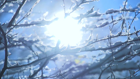 Snow tree snow falling slow motion magic winter mood Footage
