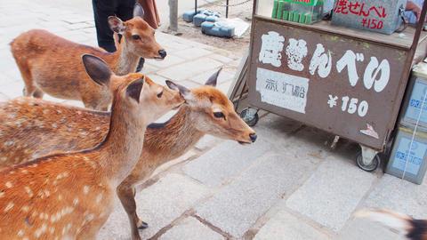 日本奈良鹿與鹿餅攤販 Nara Deer & Deer cookies Vendors Photo