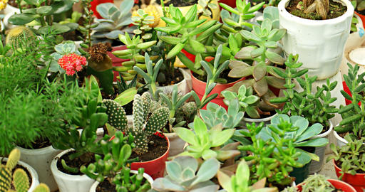 Small House Plants and Succulents in Garden Shop. 4k footage Live Action