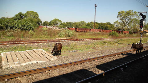 Train running through rural area Footage