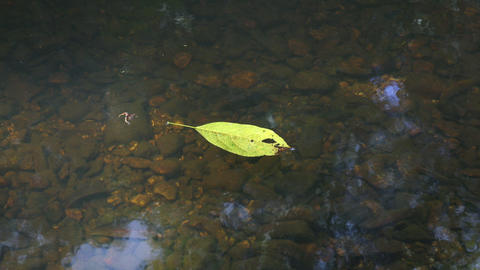 Yellow Leaf Floating Reflection Water Footage