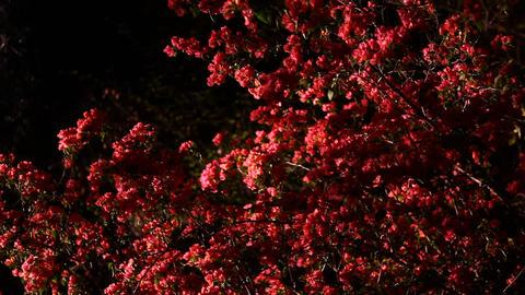 Tree and flowers Footage
