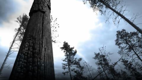 Lightning Storm Footage