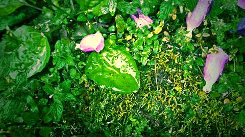 下雨天的高山草地與花瓣 Fotografía