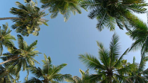 Ring of Tropical Coconut Palms on Mahaanaelhihuraa Island Footage