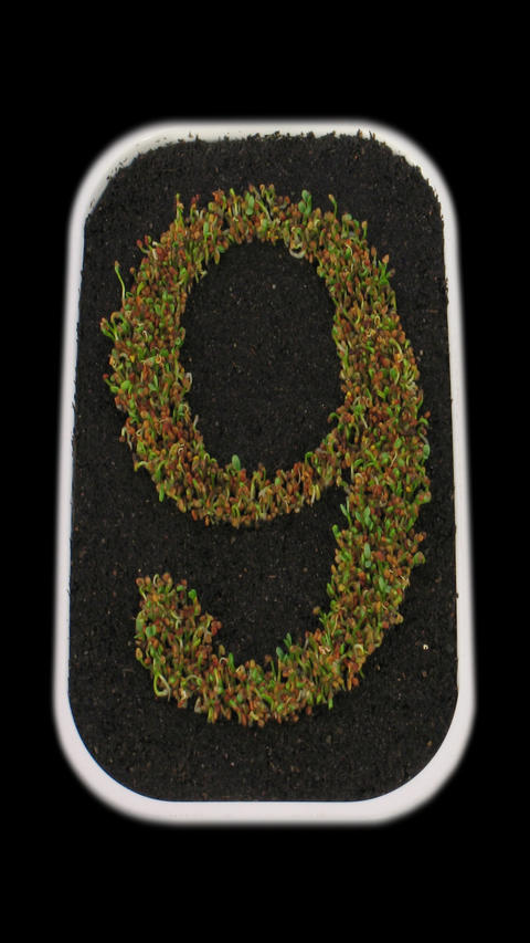 Time-lapse of growing number 9 with ALPHA channel, vertical orientation Footage