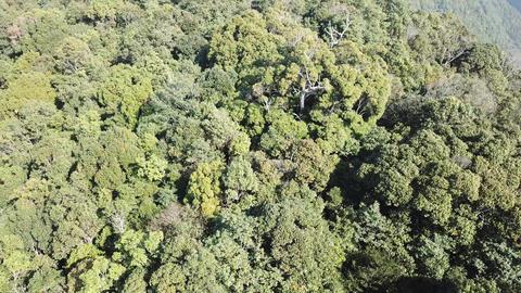 DJI MAVIC 4K Taiwan Nantou Aerial Drone Video Xiaochu Mountain 20171231 2 Footage