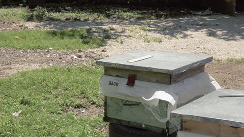 Hives of bees in the apiary, Georgia Footage