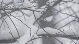 Tree in winter in the snow (close-up) Footage