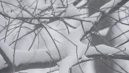Snowy winter landscape. Tree branches in the snow Footage