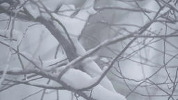 Close-up of a tree branch in the snow Footage