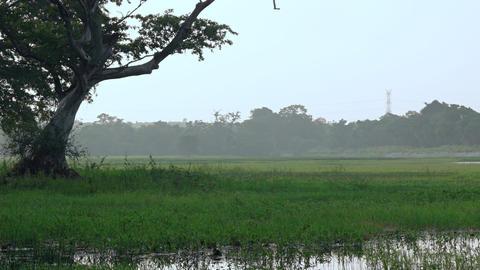 Peaceful Misty Meadow near Habarana. UltraHD 4k video Footage