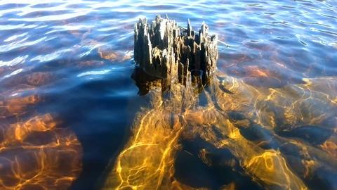 Natural ikebana. Tree in water Footage